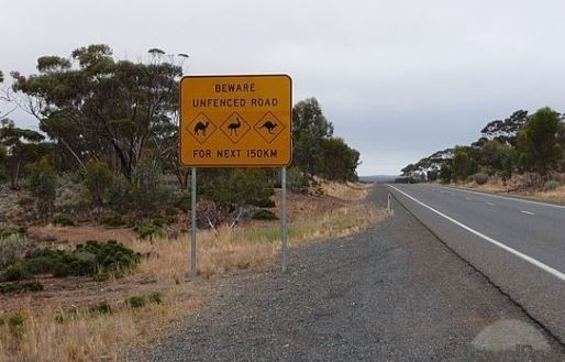 Camels,wombats, emu's & 'roos
