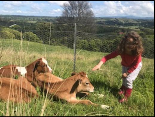 Love me love my calf's