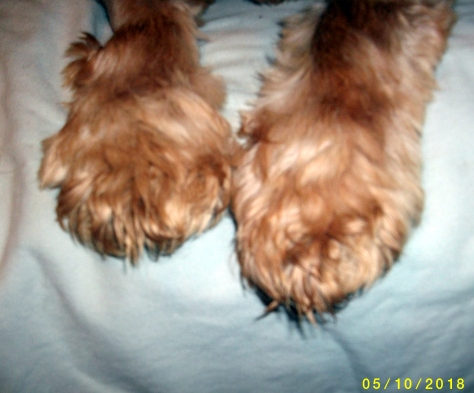 Paws in need of a trim,